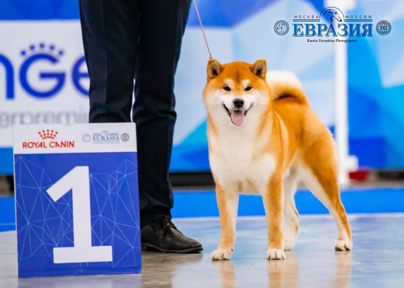 """EURASIA"" INTERNATIONAL DOG SHOW CACIB FCI"