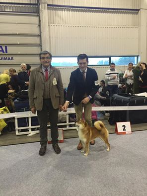 International Dog Show